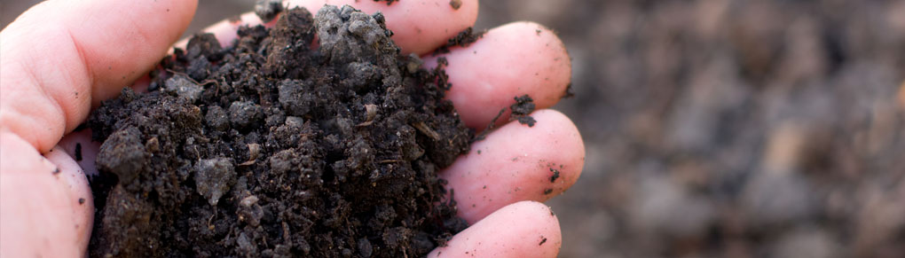 3 Simple Ways to Manage Soil-Borne Diseases