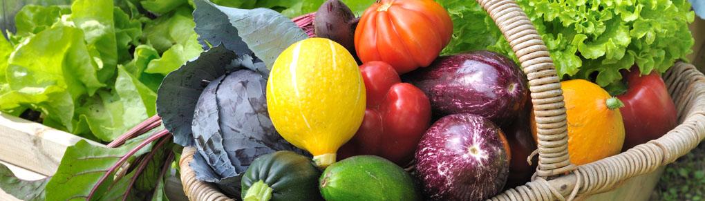 6 Proven Strategies to Boost Garden Harvests