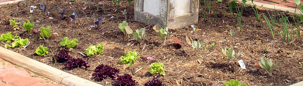 7 Common Vegetable Gardening Mistakes