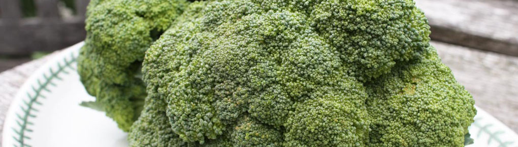7 Tips for Growing Outstanding Broccoli