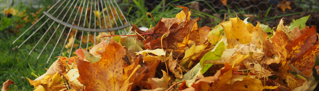Build Your Soil Using Leaves