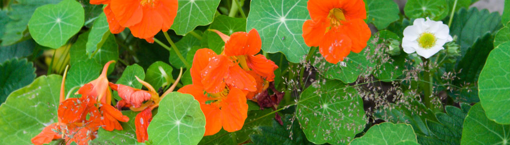 Common-Sense Companion Planting