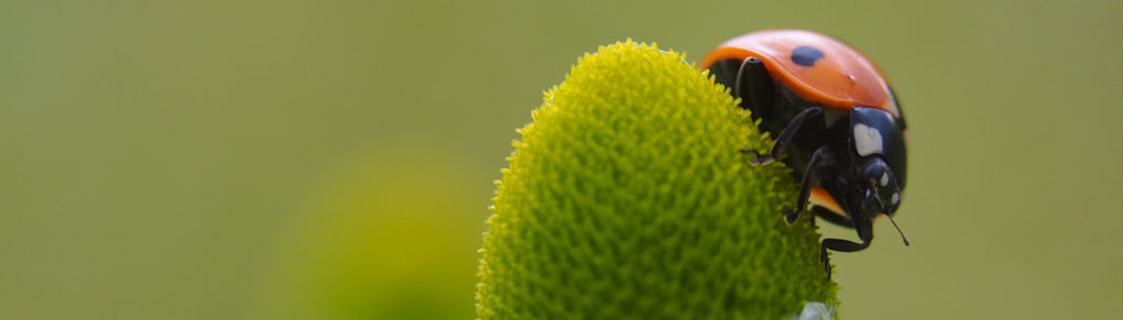 Fight Pests Without Using Bug Spray