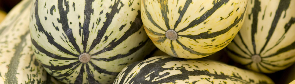 Growing Squash from Sowing to Harvest