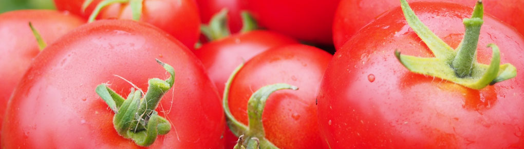 Growing Tomatoes in Cooler Climates
