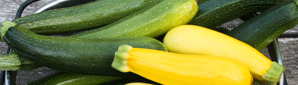 Growing Zucchini from Sowing to Harvest
