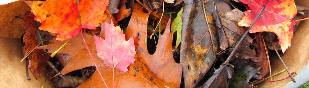 Help Garden Bugs Survive Winter Using Fallen Leaves