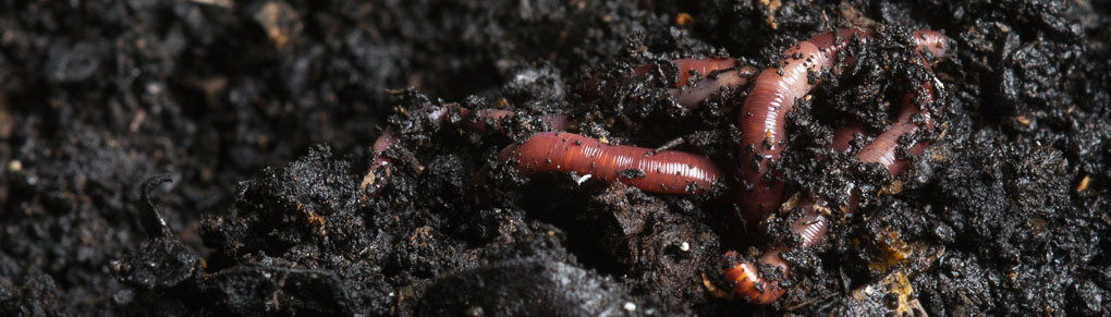 How to Improve Your Soil for Better Harvests