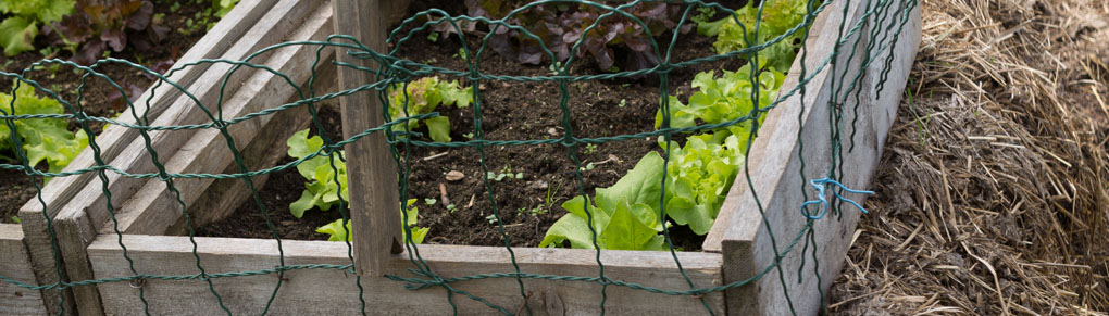 How to Make a Hotbed for the Earliest Sowings