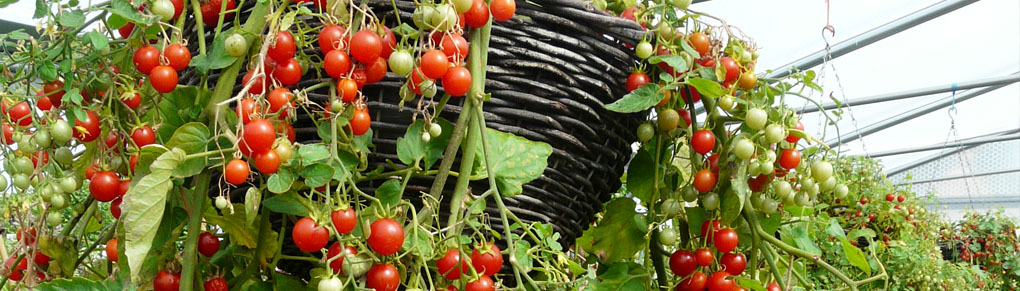 How to Plant Up an Edible Hanging Basket