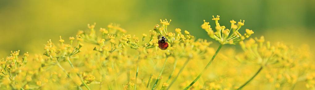 Make Your Garden a Ladybird Paradise