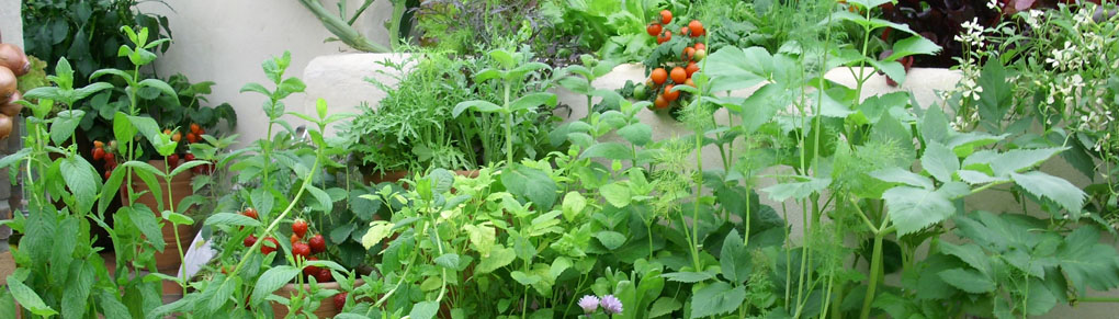Permaculture for Small Gardens