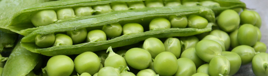 Planting Plans for Garden Peas
