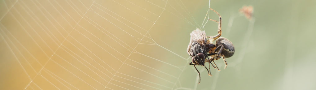 The Benefits of Spiders in the Garden