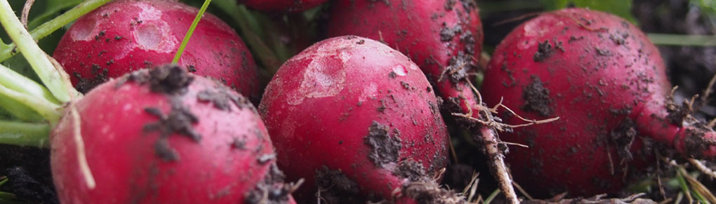 The Easiest Vegetables for Beginners to Grow from Seed