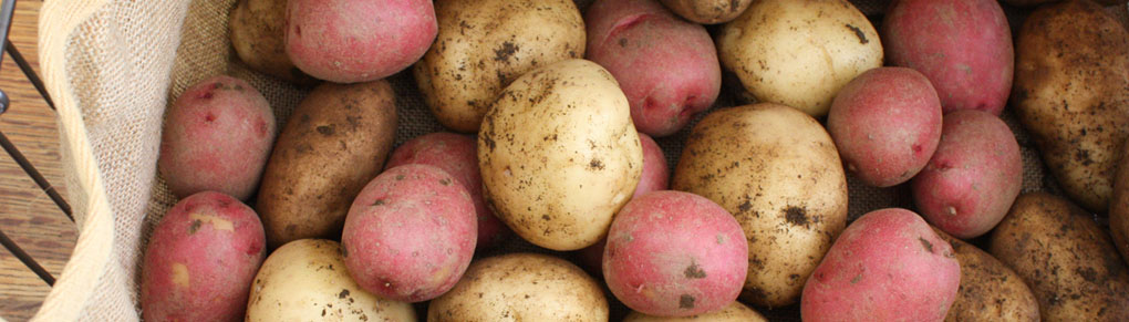 Tried and Tested Tips for Storing Potatoes Successfullys